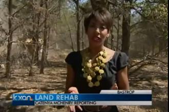 Healing the Burned Land | Catenya.com